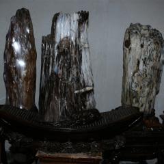 树化玉木化石批发 摆件