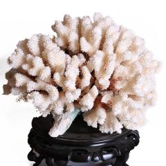 栢樂轩 奇趣收藏  珊瑚摆件